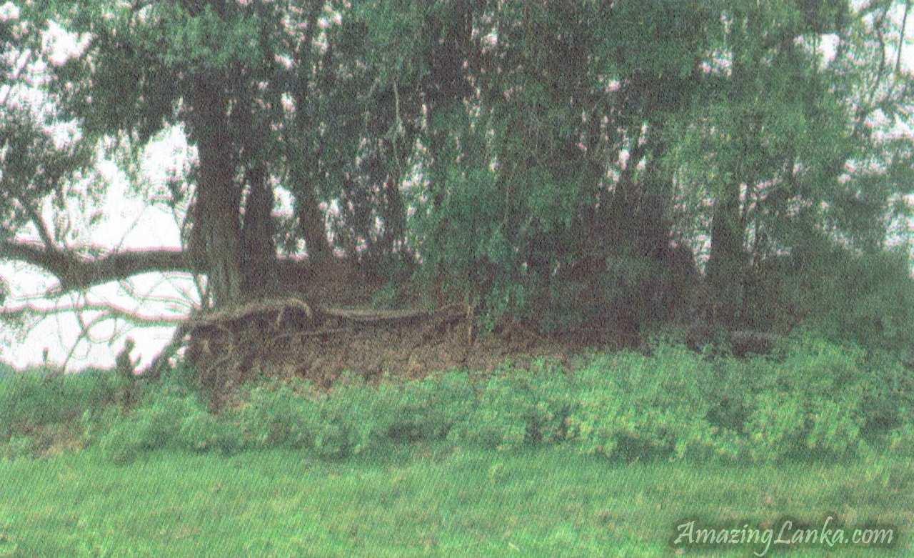 ඔඩ්ඩුසුඩාන් මුතියංකට්ටුව වැව් තාවුල්ලේ ස්තුප නටබුන් - Muthiyankadduwa Archaeological Ruins in Mulativu
