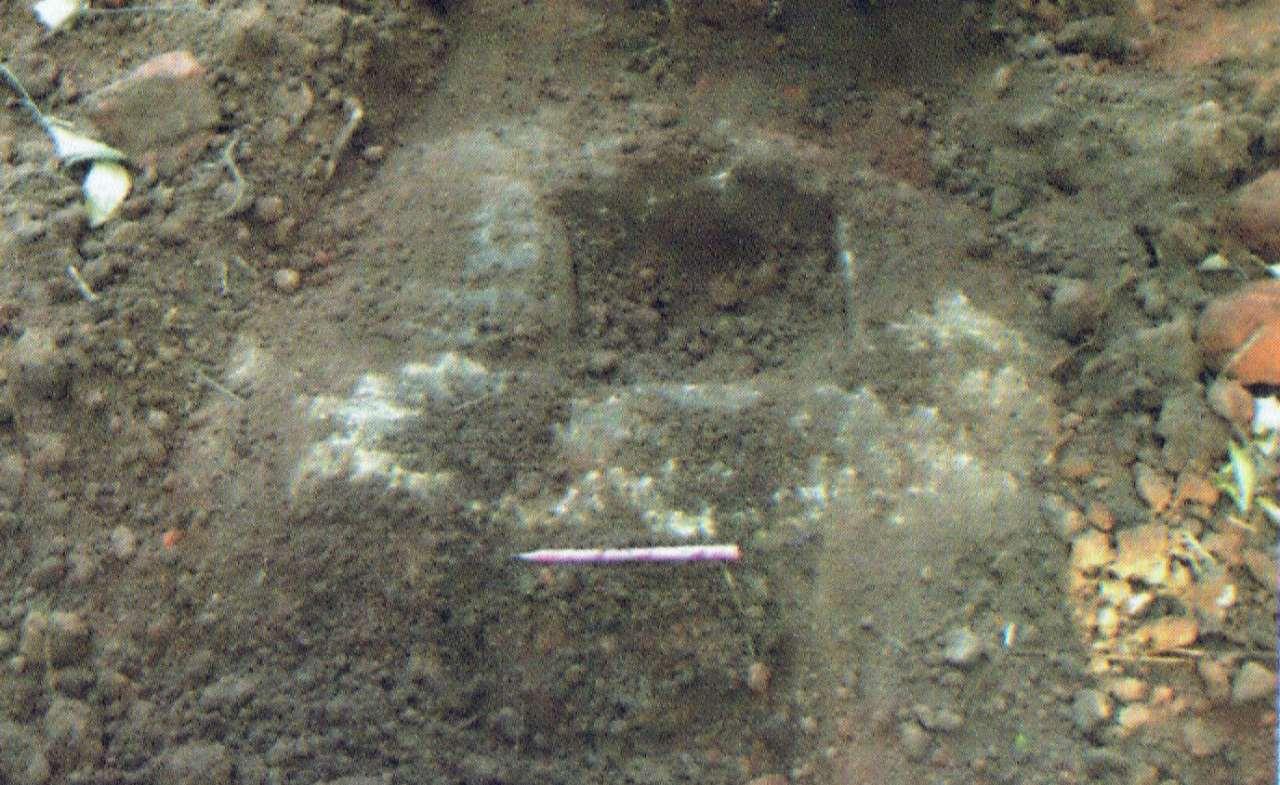 වැළලුනු කණු පාදම් -  - මුලතිවු ගුරුකන්ද රජමහා විහාරය පුරාවිද්යා නටබුන්  -  Mulativu Gurukanda Rajamaha Viharaya Archaeological Ruins