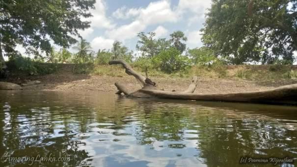 Thandikulam Buddhist Ruins In Vavuniya - වවුනියාවේ තන්ඩිකුලම් බෞද්ධ නටබුන්