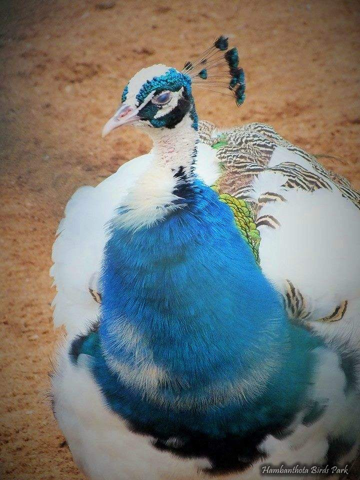 Hambantota Birds Park - හම්බන්තොට කුරුළු උයන