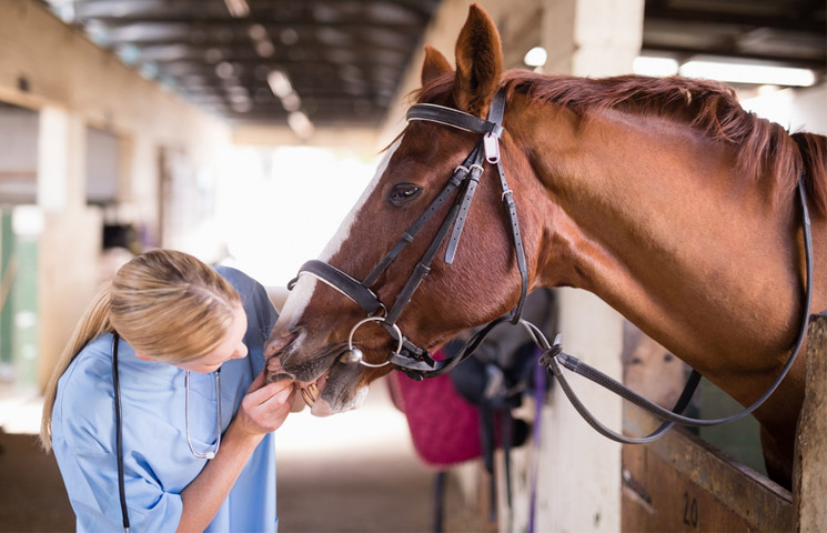 State Veterinarian Orders Quarantine of Infected Horse Facility