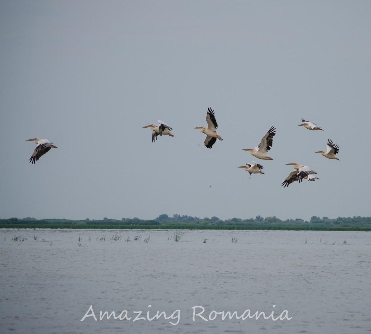Delta Dunării via Sf. Gheorghe - plajă infinită, relaxare, libertate