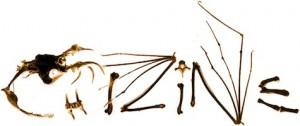 chizine_logo