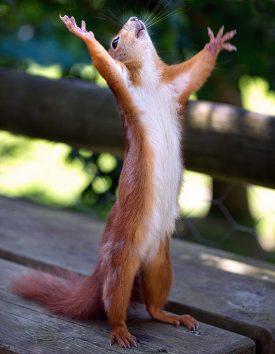 squirrel-main_1531675a