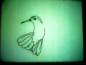 Hummingbird 1968