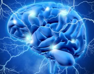 Possible Superconductivity in the Brain