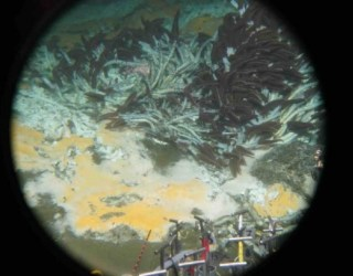Deep-sea Microbes Discovered That Gobble Greenhouse Gases, Possibly Oil Spills
