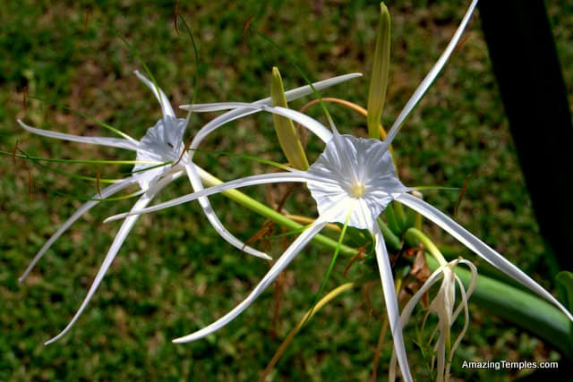 Some kind of flowers - Tulum México