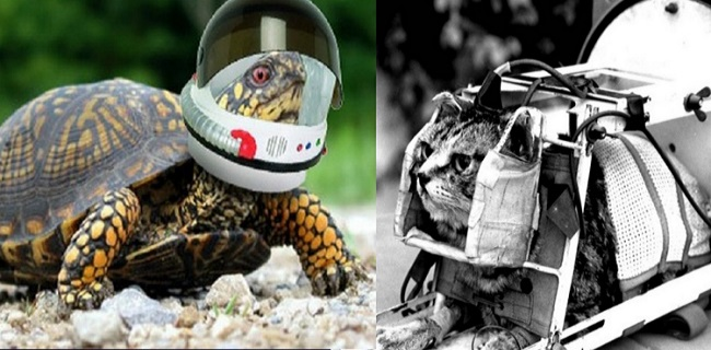 Ten Famous Animal Astronauts Who Were Sent Into Deep Space