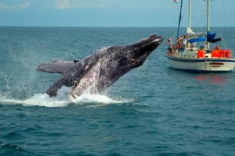 Velero Whale