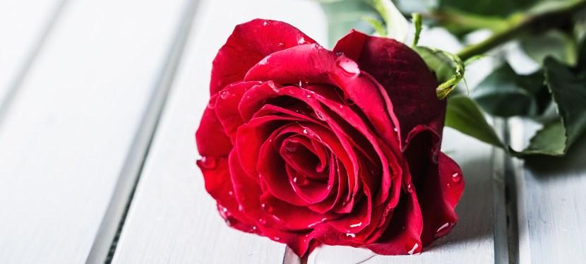 Guys, Dig Roses!