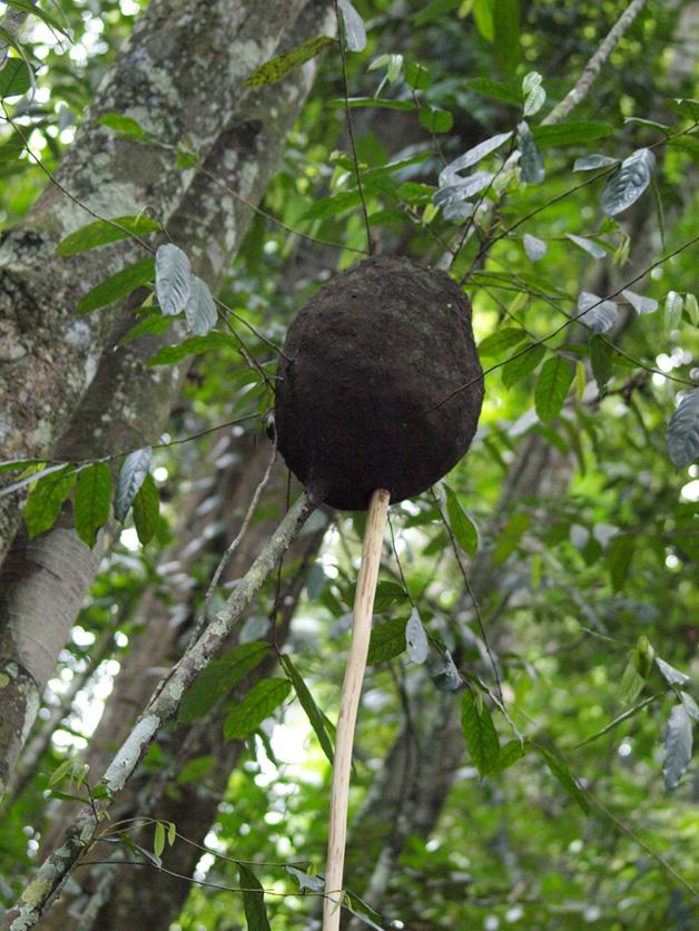 Brandon's stick in the termite mound.