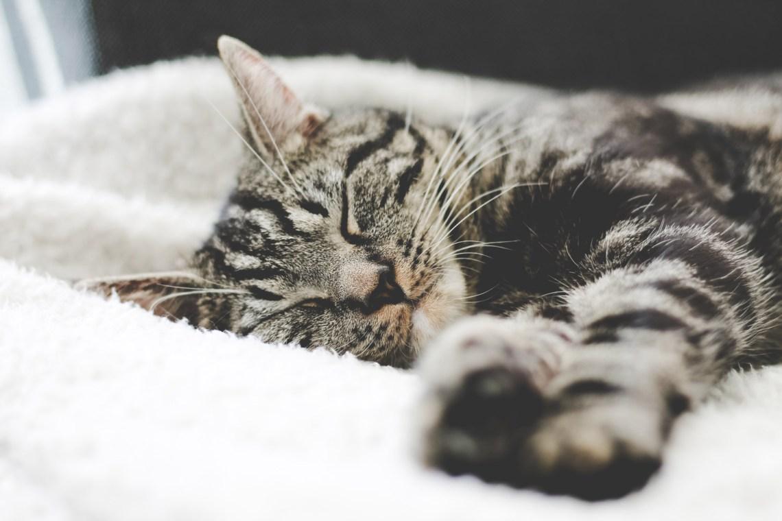 schlafende Katze Tipps bei Schlaflosigkeit