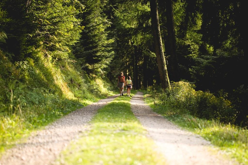 Spaziergang im Wald frische Luft Sonnenschein