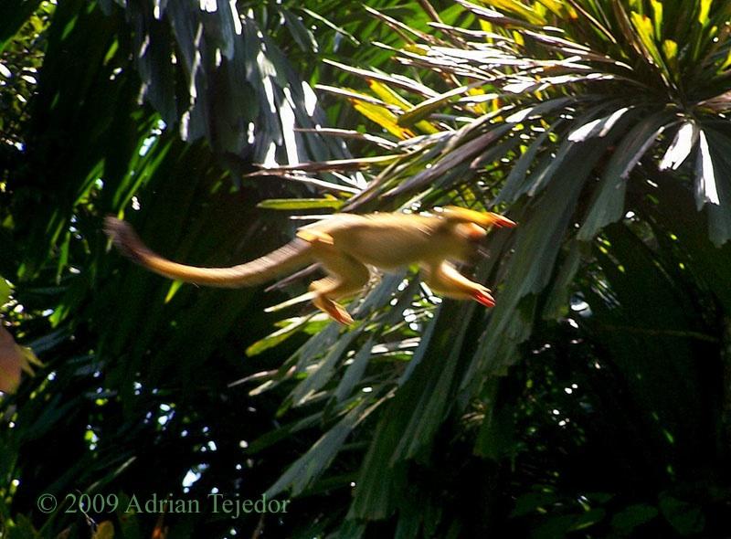 Other rainforest animals featured at animal corner: Primates Of The Amazon Rainforest Amazon Aid Foundation