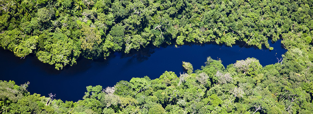 The tops of these trees collect most of the rain, moisture, and photosynthesis that the rainforest takes in. Amazon Rainforest Trees As Sentient Beings Amazon Aid Foundation