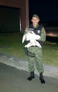 Preguiça é resgatada pelo Batalhão Ambiental