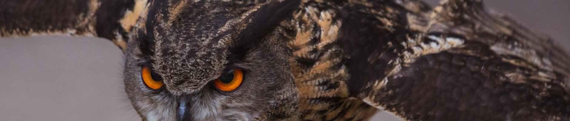 close up shot it an owl