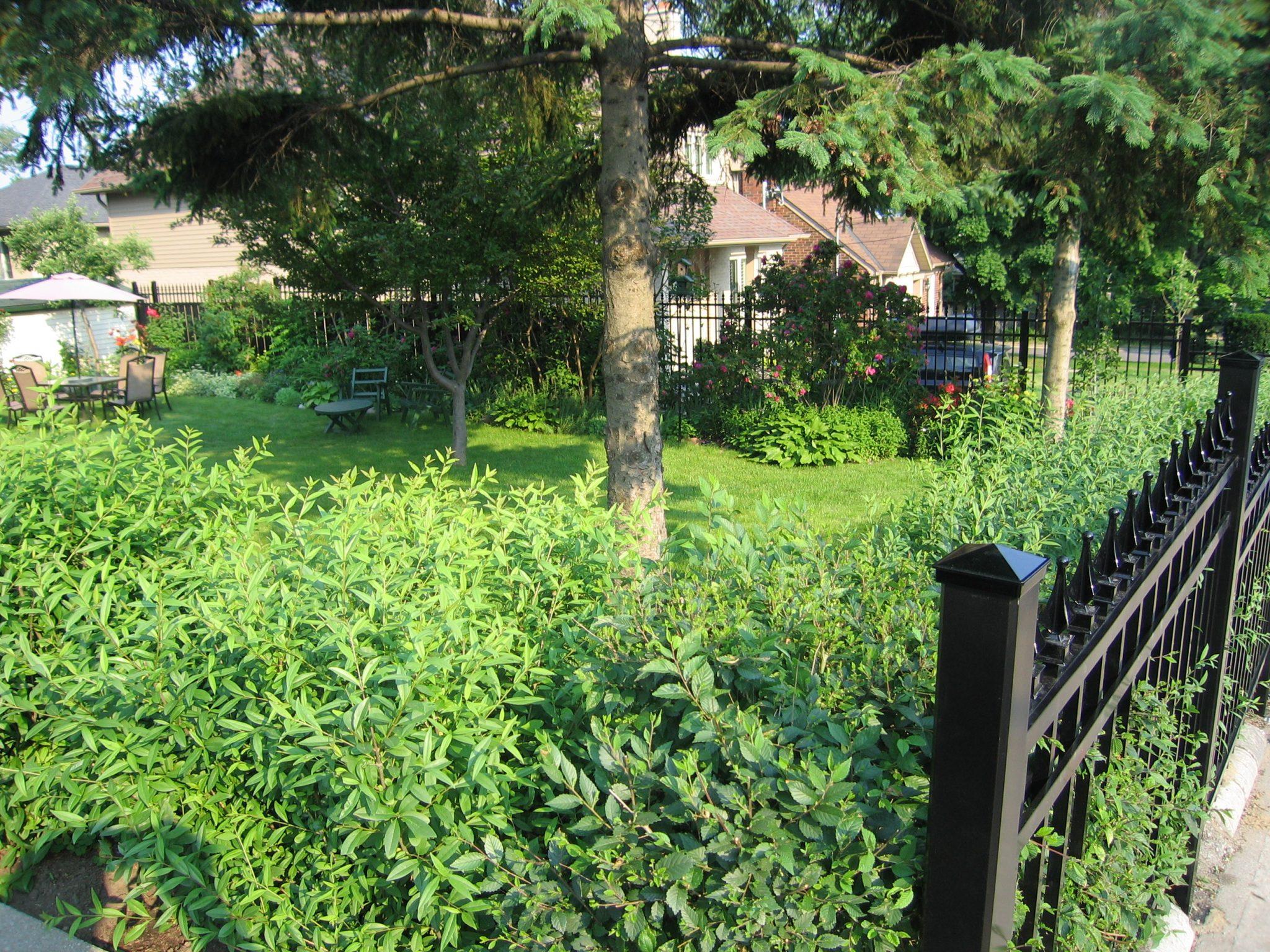 (30) Pickets encasing bushes in yard