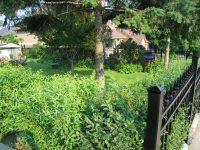 (30) Pickets encasing bushes in yard | Aluminum Railings ...