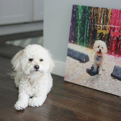DIY Pet Portrait