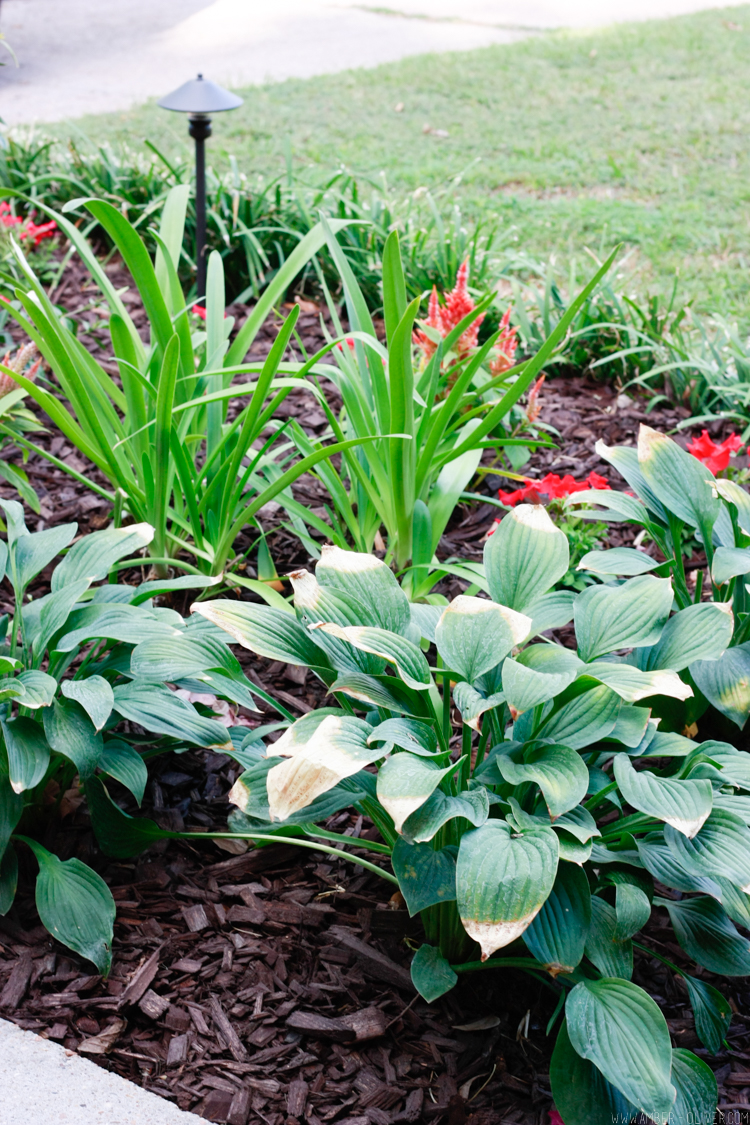 curb-appeal-flower-bed-makeover-17