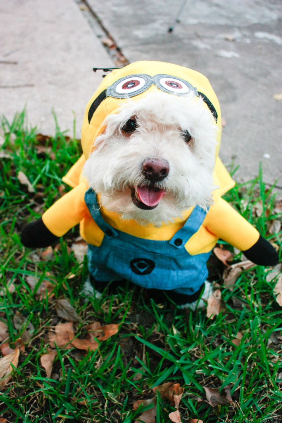 minion-diy-halloween-costumes-10