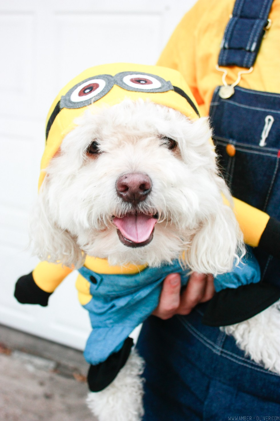 minion-diy-halloween-costumes-6