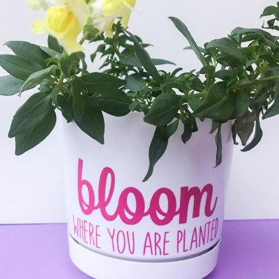 DIY Flowerpot – Planting Inspiration For International Women's Day!