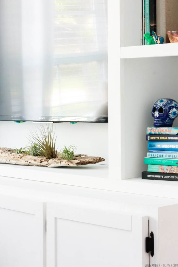 A DIY driftwood air plant holder is a creative way to use driftwood from the beach and display air plants in your home!