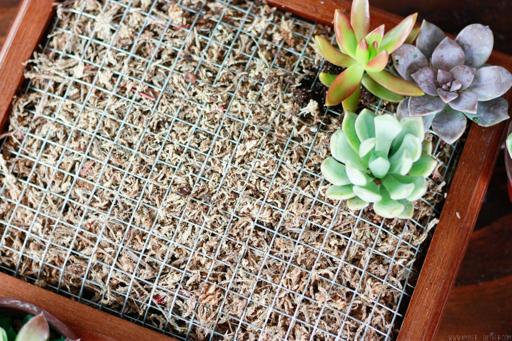 Make a DIY succulent wall planter quickly and easily by upcycling a shadow box!