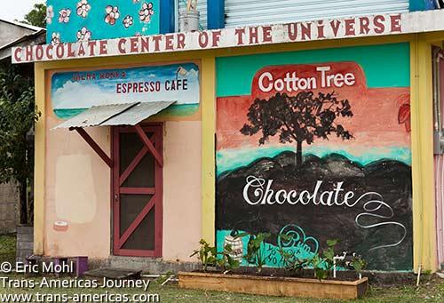Cotton tree (Ceiba) Chocolate in Punta Gorda, Belize