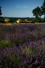 Lavender Farm II
