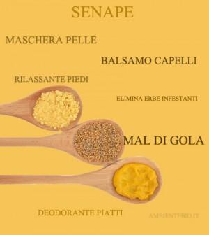 La senape propriet e vari usi non solo in cucina  Ambiente Bio