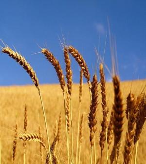 produzione cereali