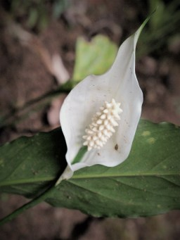 Flora (26)