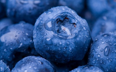 Antioxidants in Blueberries