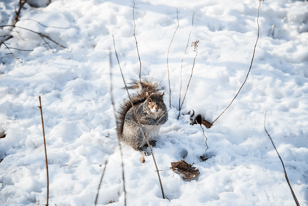 Beautiful photos of New York City February 2015 Chipmunk