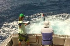port stephens marlin