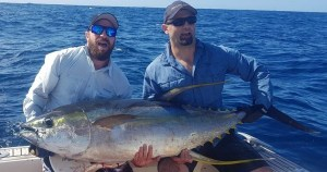 Yellowfin Tuna...