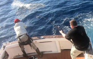 Striped Marlin playing up...