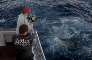 Striped Marlin on the leader...
