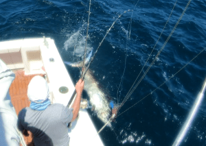 Black Marlin at the boat