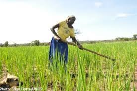 World Bank inks agreement project $165 million to support smallholder farmers in Odisha