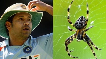 Newly Discovered Species of Spider Named After Sachin Tendulkar