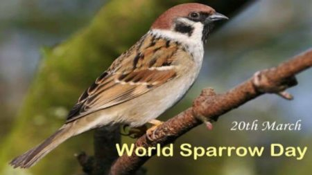 20th March: World sparrow day