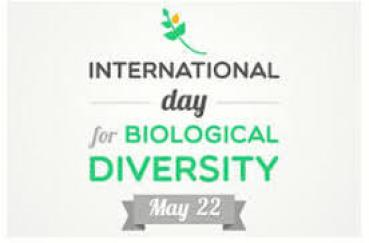 22nd May: International Day for Biological Diversity 2020