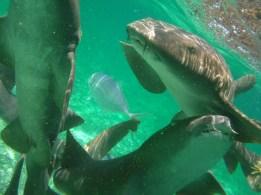 Shark-Ray Alley Caye Caulker
