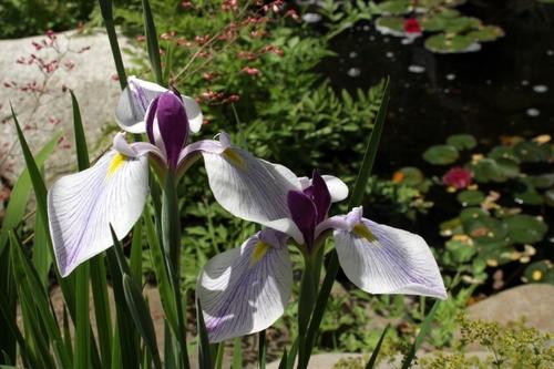 Ambler Design in the News | Fine Gardening Magazine