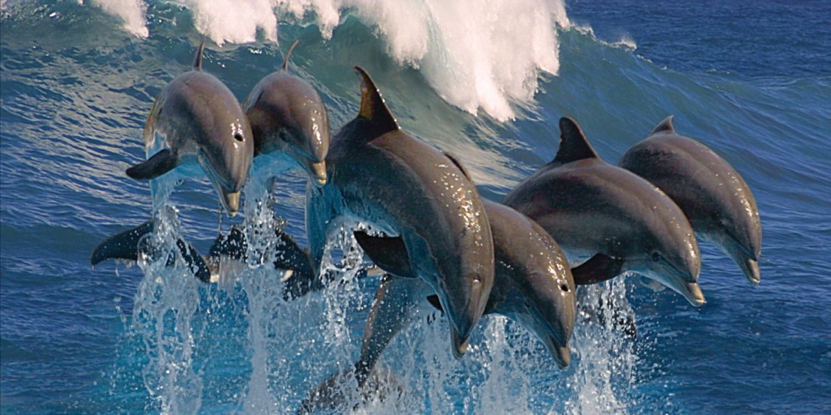 Top 10 Most Fascinating Facts about Dolphins